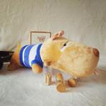 Chó bông Puco nhỏ TBCPC1