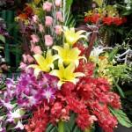 Giỏ hoa lan HT090