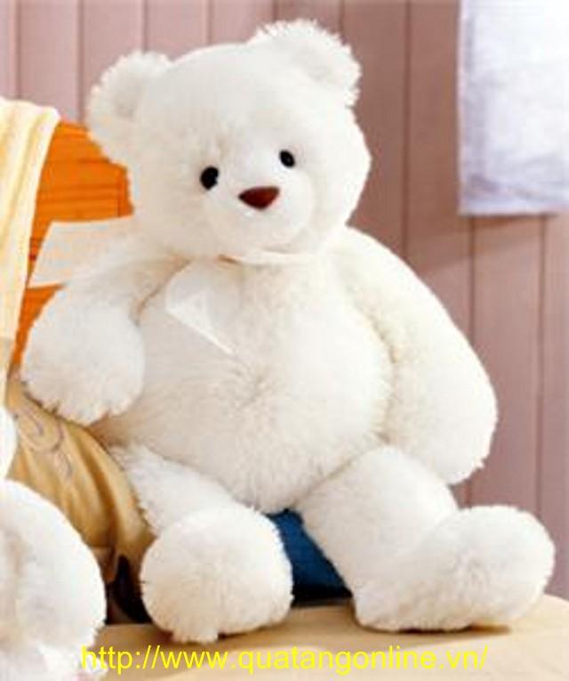 Gấu Bông - Thú Nhồi Bông